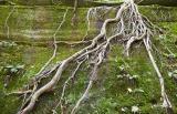 Roots *.jpg