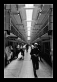 Alcatraz EPO_3706.jpg
