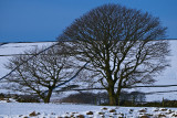 North Derbyshire in January