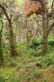 Pine forest, Ugljan borov gozd_MG_5643-11.jpg