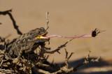 Life In The Namib Desert