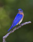 Weekend birds