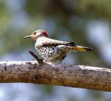 Faulkner County (AR) Bird Count 2011