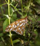 Butterflies 2011