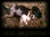 Puppy at LR Air Force Base