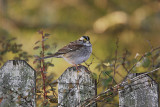 bird_photos