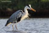 BIRDS  by Carmine Arienzo