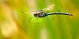 Dragonfly flies away