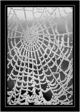 Frozen web, near Martock, Somerset