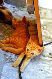 Les chats de Korcula