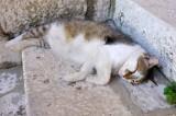 Autre Chat à Korcula