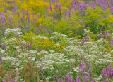 late_summer_wet_meadow_colors