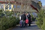 Christmas tree lot at Lehel Csarnok