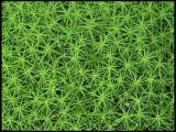 Mosses.jpg
