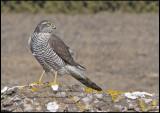 Owls and Birds of Prey