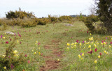Orchids and Cowslips.jpg