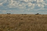 Warthogs in the distance