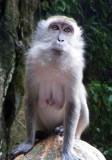 Coy Lady Monkey