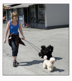 10. Walking the dogs........