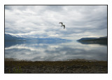 Seagull over quiet water......