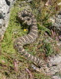 Snakes And Lizards ALong My Travels