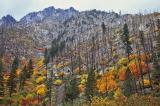 Fall hillside Near Leavenworth Washington