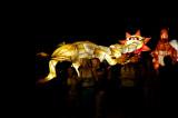 Goanna, Sun and Kangaroo lanterns