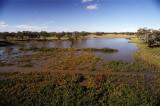 Flooded billabongs near Bourke
