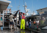 Offloading tuna catch at The Spit, Mooloolaba