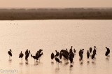 Waterfowl, Rann of Kutch