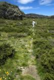 Mt Cope Track, Bogong High Plains
