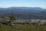 Mt Buffalo from Hotham Heights