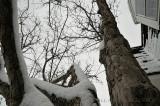 Vertical Shoot 20110227_03 Tree in Snow.JPG