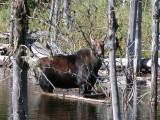 Mammals of Madawaska & Restigouche Co.NB