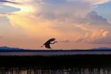 Heron at Dusk  42 x 28 cm