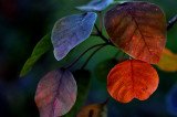 Sunset Leaves 61 x 41 cm