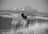 Lewa Rhino & Mt. Kenya 45 x 30 cm