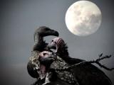 Moon Vultures 40 x 30 cm
