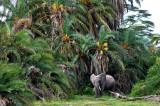 Palm Elephant 88 x 61 cm
