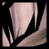 Sisal Detail 30 x 30 cm