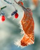 2012-01-Topic-IceCrystals