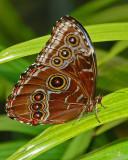 09_05_Open_ButterflyDots