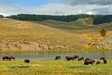 2012-05-Topic-BuffaloCountry