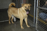 Dogs for Adoption At the San Martin Animal Shelter