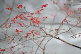 Flowers/Plants/Trees