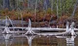 Adirondaks From Kayak 5 Quimby Pond
