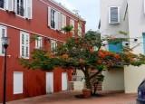 Flame tree on the Punda side