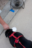A cold drink of water and a fan for the doggie!