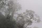 Rainforest