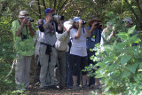 Looking for the Swainson's Warbler